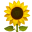 :sunflower: